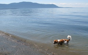 Oliver at the beach on Lummi Island